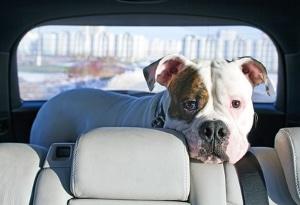 Wer bekommt den gemeinsamen Hund bei Trennung? Auch hier kann ein Rechtsanwalt in Halle helfen, der Familienrecht als Schwerpunkt anbietet.