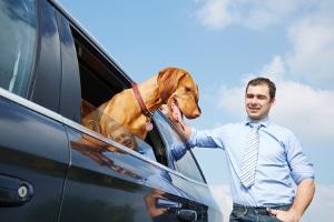 Hausrat: Der hund und andere Haustiere zählen im rechtlich zu den Hausratsgegenständen.