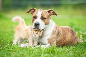 Scheidung: Wem gehört was? Haustiere sind oft ein strittiges Thema bei der Hausratsaufteilung.